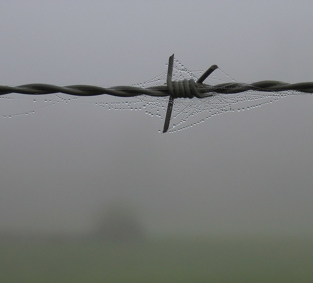 liquid water on fence, with fog in background