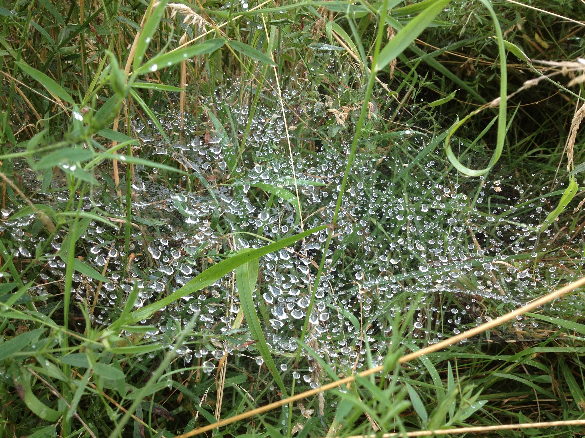 Water droplets on spider's web