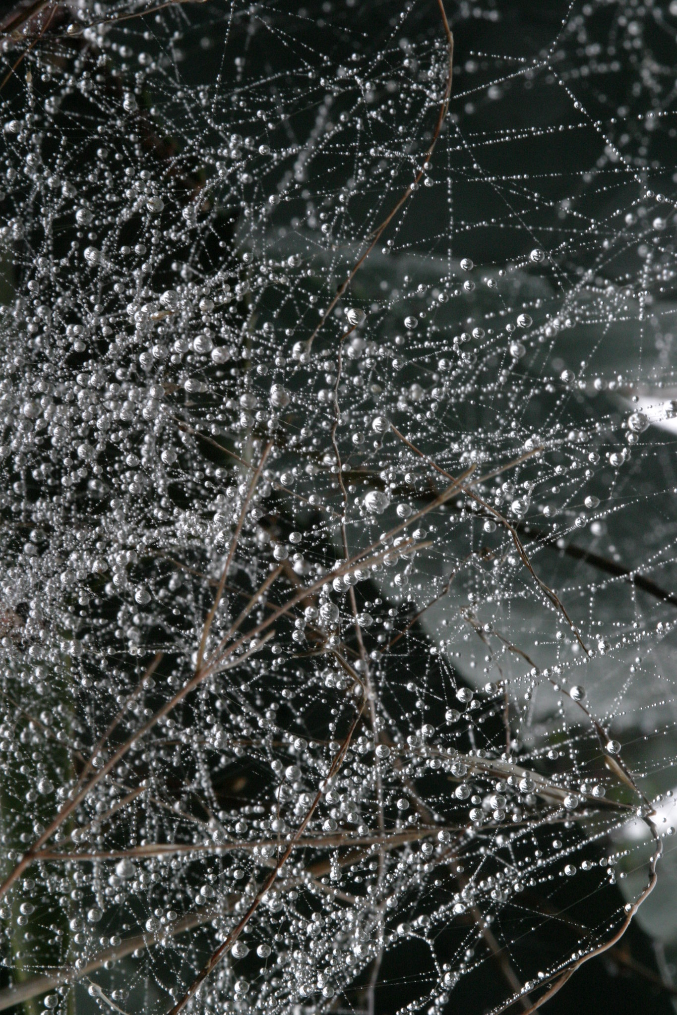 water droplets in spider web
